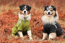h cross australian shepherds hurtta frost dog jacket u0026 winter coat waterproof u0026 windproof