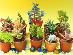 fix of green delivered to the doorstep potted plant gift combo by