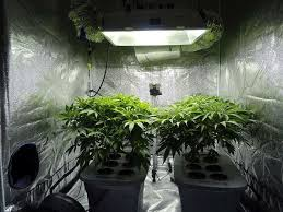 250 watt hid grow lights everything you need to know about hid lighting to grow cannabis