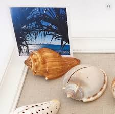 where to buy seashells from where to buy seashells and unique gifts for your loved ones