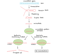 overview eukaryotic gene regulation article khan academy
