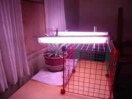 lights of america grow light lights of america 24 fluorescent grow light fixture fluorescent