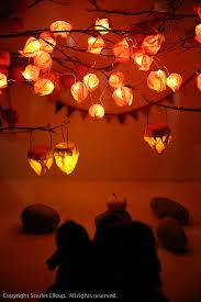 Japanese Lantern Plant Wish Upon A Lantern U2014 Scarlet Elfcup
