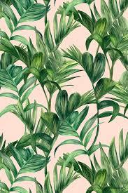 Tropical Plants Images - 344 best the tropics images on pinterest plants prints and