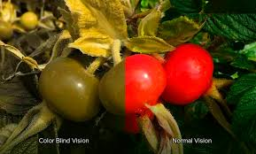 Incidence Of Color Blindness What Is Color Blindness Red Green Color Blindness Think About