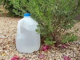 diy drip water plants using milk jugs birds and blooms