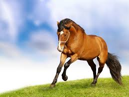 16415 horse wallpaper collection walops com