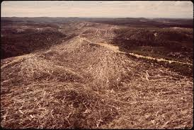 us bureau of indian affairs file a large area of slash remains following logging operations by