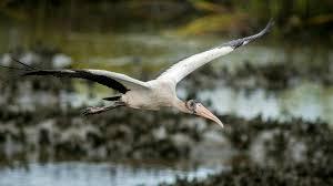 South Carolina wildlife images 15 photos of wildlife at huntington beach state park in south jpg