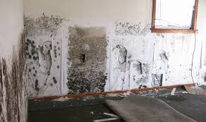 Cost To Remove Mold In Basement - how to remove black mold from carpet and walls