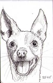 sketch of a very silly looking dog one drawing daily