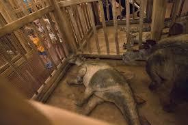 giant noah u0027s ark built by kentucky creationists for 100 million