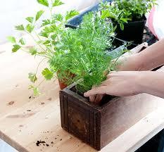 best 25 indoor herb planters ideas on pinterest diy herb garden