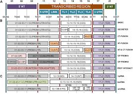 goldenbraid 2 0 a comprehensive dna assembly framework for plant