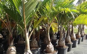 spikeless palm trimming additional services