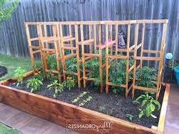 home design awesome large tomato cagess