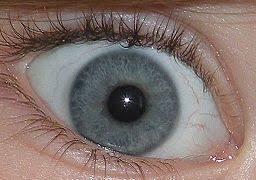 Gray Blue Color - eye color wikipedia