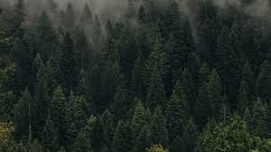 download wallpaper 1920x1080 trees green fog forest shroud