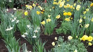 Botanical Garden Definition by Flowers Indoor Botanical Garden Tom March Orange Flowers White