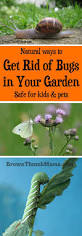 171 best garden pests images on pinterest garden pests garden