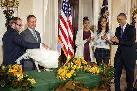 president obama pardons the national turkey