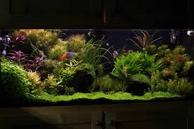 55 gallon aquarium light have you ever seen a nice looking 55 gallon page 4 the planted