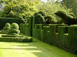 Yew Topiary - topiary the garden at levens hall