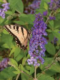 flowers that attract butterflies butterfly garden flowers hgtv