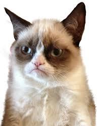 Grumpy Cat No Memes - remix remix csp 3 29 2 pt clicker game app lab
