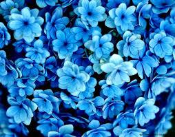 blue wallpaper on wallpaperget com