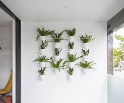 Top Indoor Plants Top 10 Indoor Plants For A Busy Household