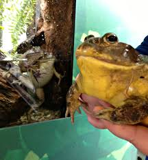 frogs u2013 adventure insider