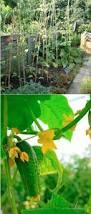75 best grow it in the garden images on pinterest
