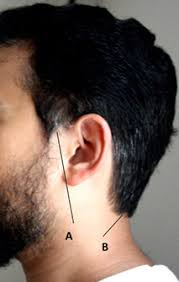 how to cut hair with rounded corners in back do not cut the hair at the sides of your head or trim your beard