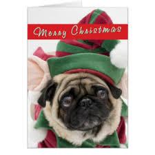 pug cards greeting photo cards zazzle