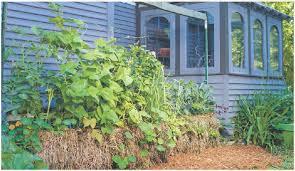 how do straw bale gardens work quarto homes
