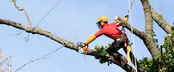 what does a tree service technician do