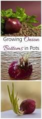 192 best container gardening images on pinterest indoor