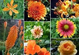 autumn garden flowers u2013 orange and red shades for the summer final