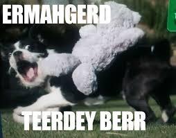 Ermahgerd Animal Memes - ermahgerd animal meme