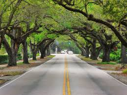Florida scenery images South florida scenic drives to do with kids south florida finds jpg