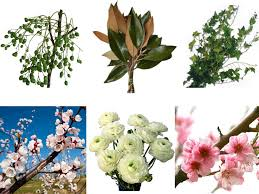 flowers to go blooming branches and live plants to go green with your wedding