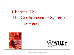chapter 20 the cardiovascular system the heart ppt download