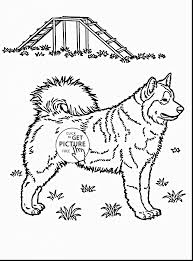 superb husky dog coloring pages printable with husky coloring
