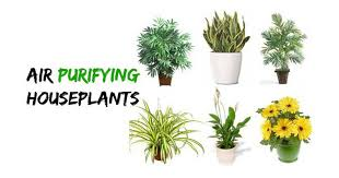 25 types of houseplants that clean the air