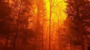 Tennessee Forest images Tennessee wildfires devastate communities threaten wildlife the jpg