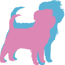 affenpinscher long hair affenpinscher dog breed health history appearance temperament