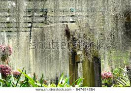 singapore national orchid garden stock images royalty free images