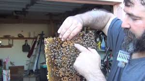 bees in my garage now what youtube
