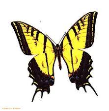butterfly tattoos com butterfly designs tattoos